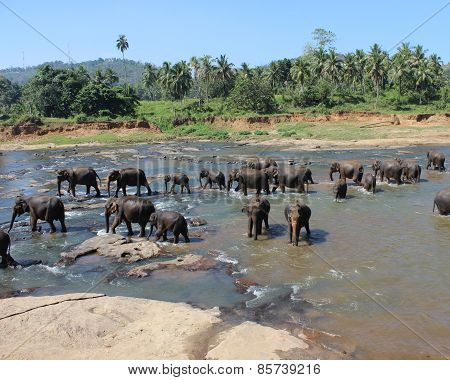 the elephants bathing