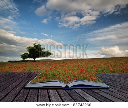 Beautiful Poppy Field Landscape During Sunset With Dramatic Sky Conceptual Book Image