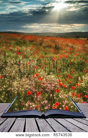 Stunning Poppy Field Landscape In Summer Sunset Light Conceptual Book Image