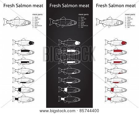 Fresh Salmon Meat Diagram