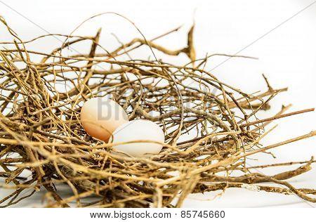 Bird Eggs And Net, Nest Zebra Dove (geopelia Striata).