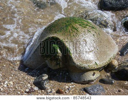 Stone Turtle At The Seashore