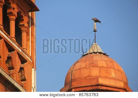 Close View Of A Small Dome With Hawk Sitting On Top, Safdarjung Tomb, New Delhi, India
