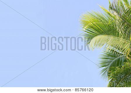Palm tree's leaves