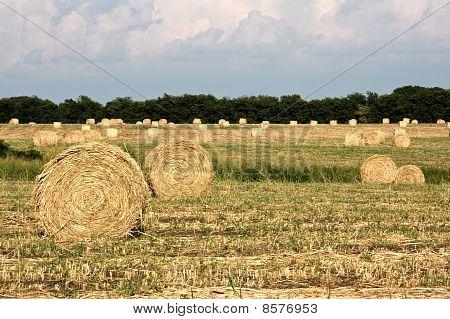 Hay Bails Landscape