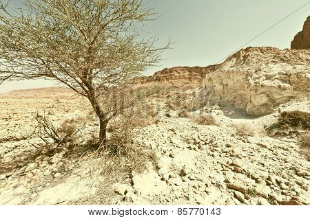 Tree In Desert