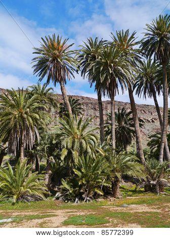 The oasis Barranca de la Madre of Ajui