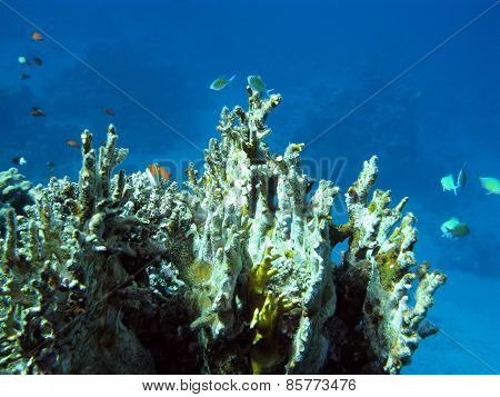 Colorful Coral Reef In Tropical Sea, Underwater