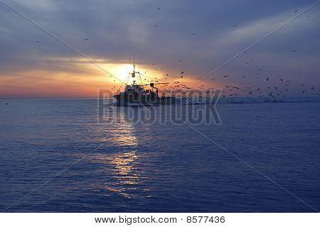 Professional Fishing Boat Seagull On Sunset Sunrise