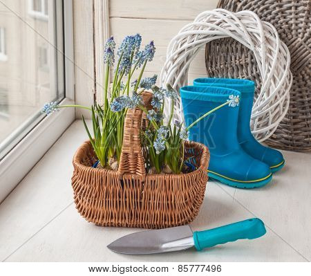 Muscari In The Basket And Shovel