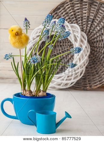 Muscari In Blue Cup
