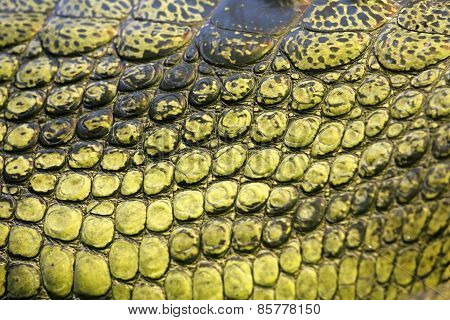 Skin Of The Gavial