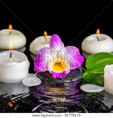 Spa Concept Of Purple Orchid Dendrobium, Green Leaf With Dew And Candles On Black Zen Stones In Ripp