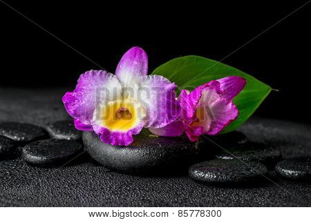 Closeup Of Spa Background With Purple Orchid Dendrobium And Green Leaf Calla Lily, Drops On Black Ze