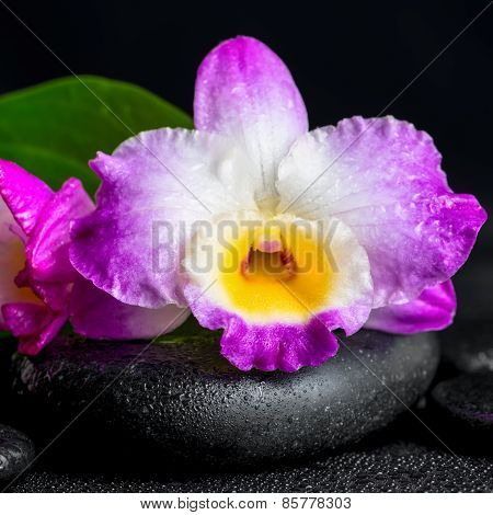 Spa Still Life Of Purple Orchid Dendrobium And Green Leaf Calla Lily With Drops On Black Zen Stones,