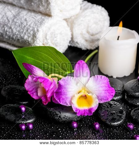 Beautiful Spa Still Life Of Purple Orchid Dendrobium, Leaf With Dew, Towels, Candle And Pearl Beads