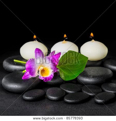 Spa Concept Of Orchid Flower Dendrobium, Green Leaf Calla Lily And Candles On Zen Stones Background