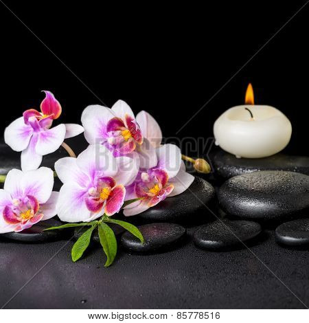 Beautiful Spa Still Life Of Purple Orchid Phalaenopsis, Green Leaf And Candle On Black Zen Stones Wi