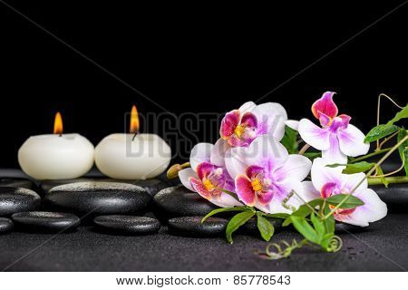 Beautiful Spa Still Life Of Purple Orchid Phalaenopsis Green Twigs And Candles On Black Zen Stones W