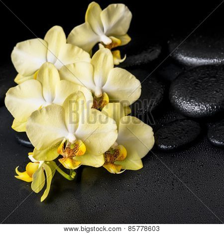 Beautiful Spa Still Life Of Yellow Orchid Phalaenopsis On Black Zen Stones With Drops, Closeup