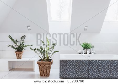 Houseplants In Luxury Washroom