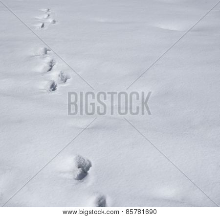 Footprints in a snow composition background