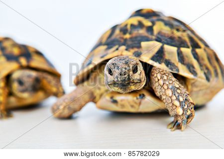 Turtle In Front Of White Background
