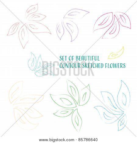 Contour Sketched Flowers
