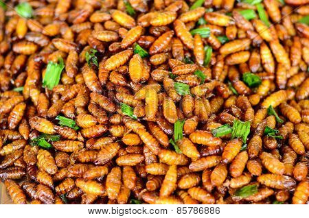 Fried Silkworm Pupar