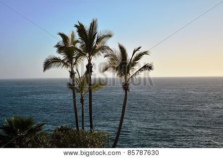 Coastline scene with palm trees from southern Tenerife. Canary Islan
