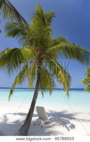 Palm tree on a sandy beach at the cyan sea. Maldives.