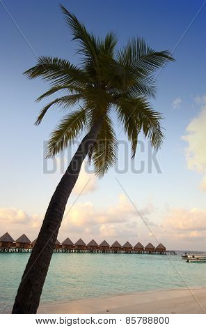 Huts in the sea and a palm tree