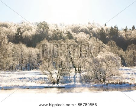 Frozen trees near the river in the sunshine