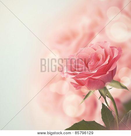 Beautiful Pink Rose. Retro style toned.