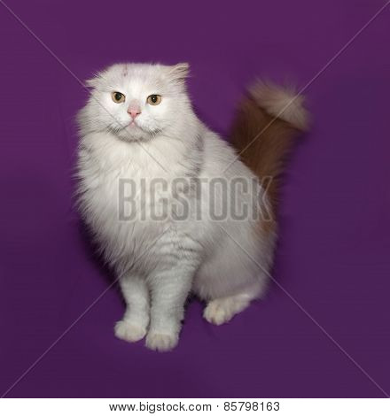 White Fluffy Cat With Ginger Tail Standing On Lilac
