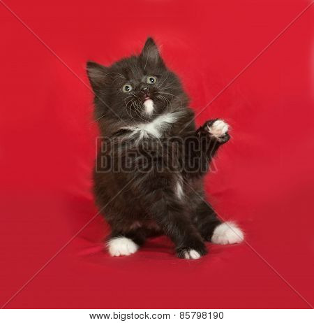 Black And White Fluffy Kitten Sitting On Red