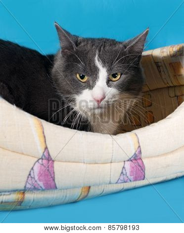 Gray And White Cat Lying In Couch On Blue