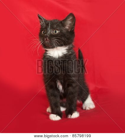 Black And White Fluffy Kitten Sitting On Red