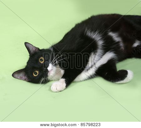 Black And White Cat Lies On Green