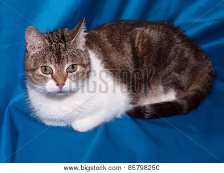 Striped And White Cat Lies On Blue