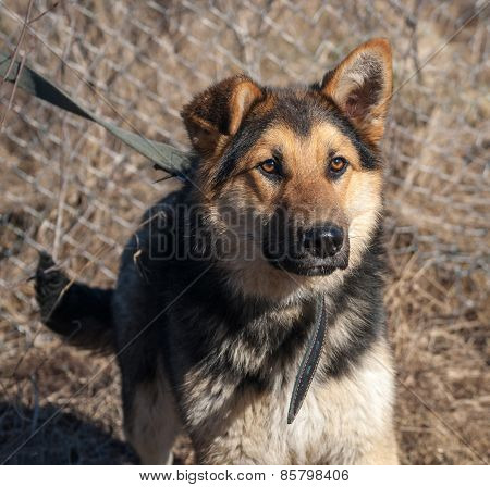 Black And Red Shaggy Dog On Background Of Mesh Fence