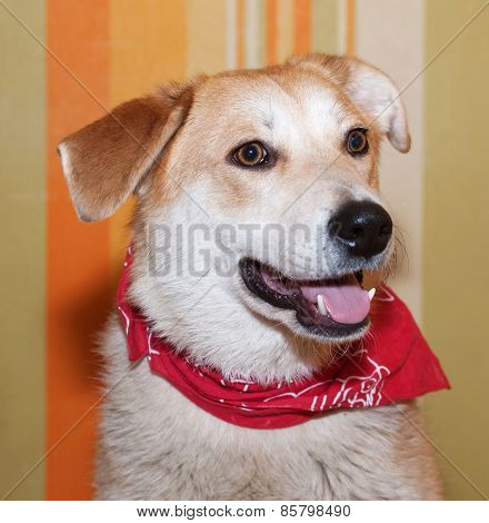 Red Dog In Red Bandanna On Background Of Wallpaper