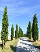 picture of senesi  - Crete senesi characteristic landscape in province of Siena Tuscany Italy - JPG