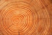 stock photo of timber  - Slice of wood timber as a natural background - JPG