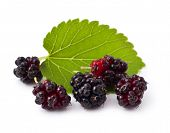stock photo of mulberry  - Ripe fresh Mulberry on a white background - JPG