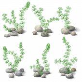 picture of green algae  - Green hornwort algae and pebbles set isolated on white - JPG