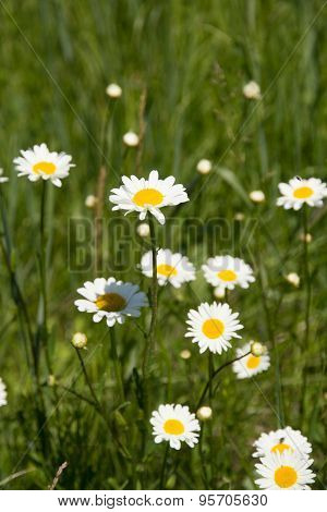 Flowers On To The Meadow
