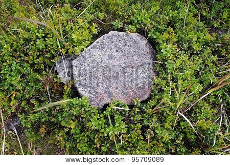 Cowberry And Stone Covered With Lichen