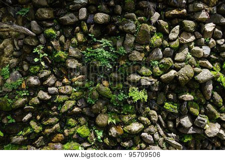 Humid Rock Wall