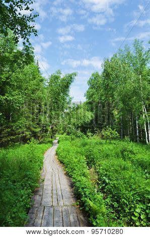 Wooden Track   In Forest